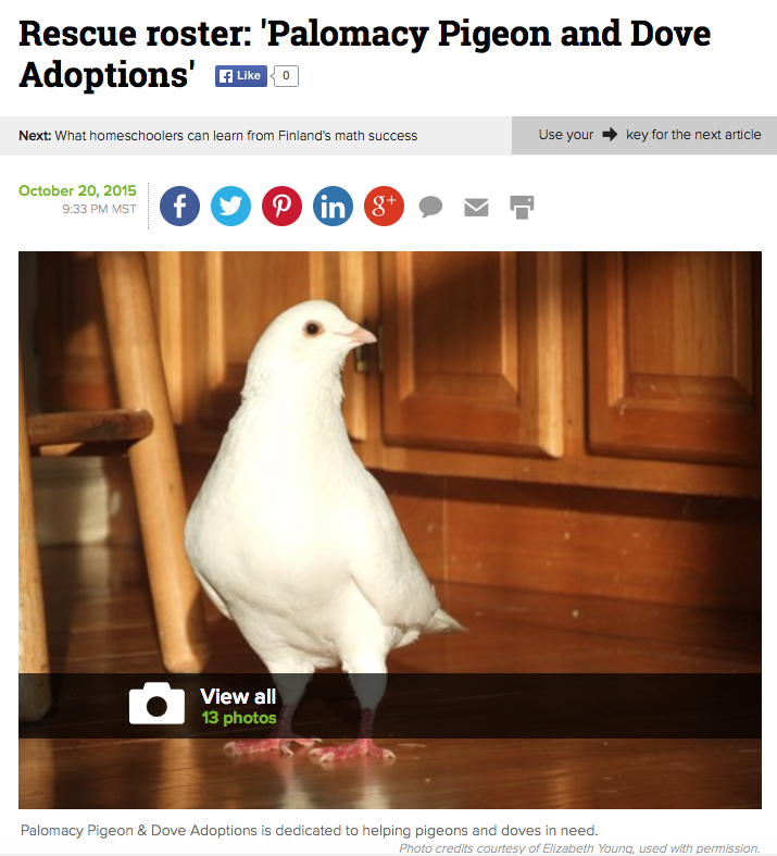 Rescue Roster: Palomacy