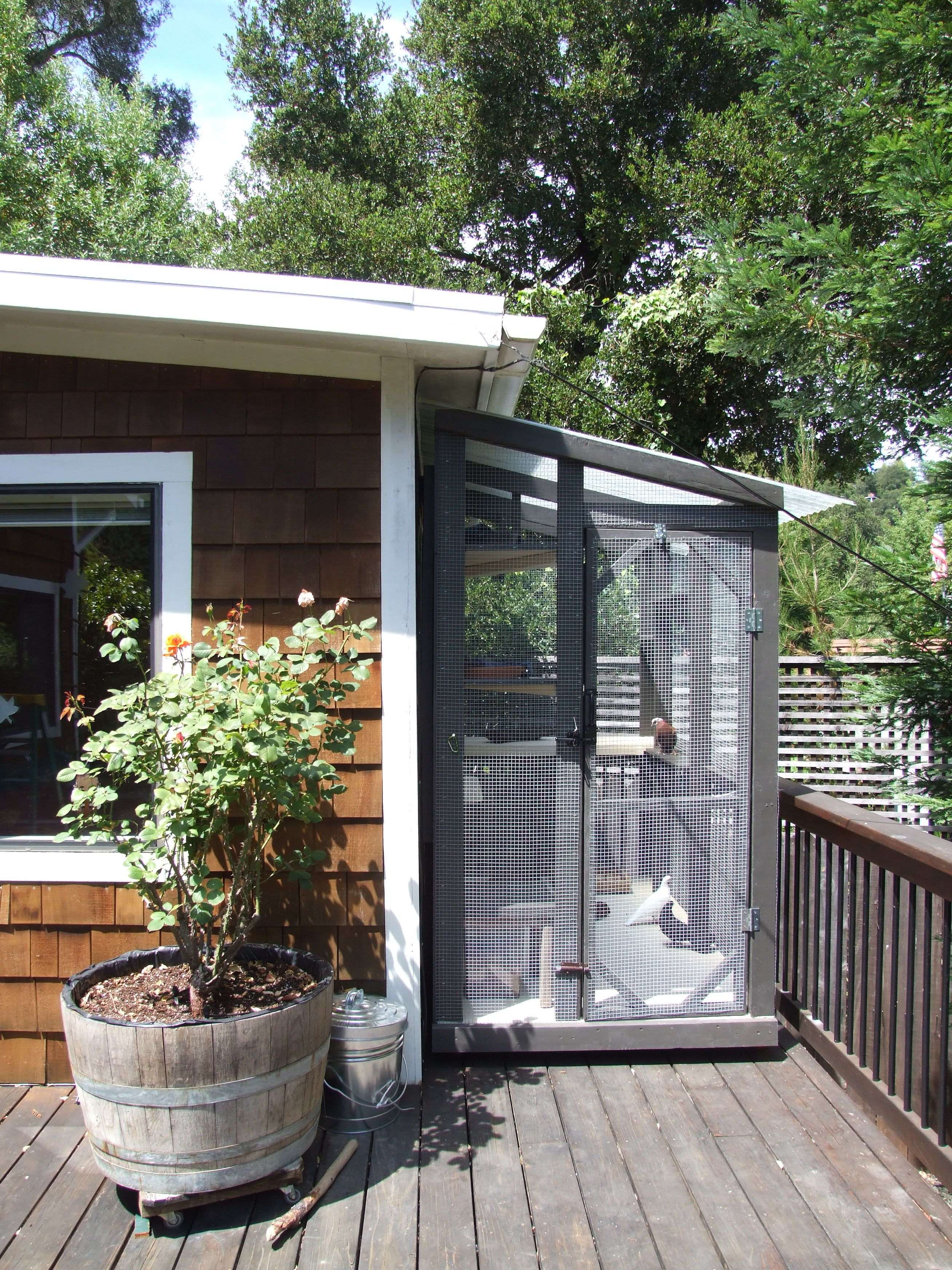 How to Create an Aviary for Rescued Pigeons or Doves |