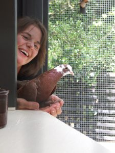 Rescued pigeon Gem inspired Shae to build this aviary