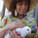Volunteer with rescued king pigeon