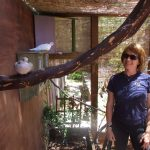 Adopter in her dove aviary