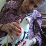 Elderly resident at assisted living enjoys meeting pigeon