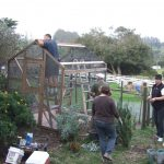 MickaCoo volunteers building a new aviary for rescued king pigeons
