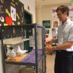 San Francisco Animal Care & Control finally set up a foster cage for pigeons in their lobby