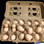 Dozens of pigeon and dove eggs swapped for fakes for birth control