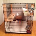 Adopted pigeons in extra large dog crate