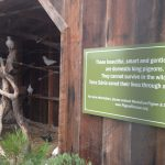 Sign about rescued pigeons at beautiful aviary built by winery
