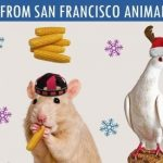 Pigeon in Santa hat included with other pets on shelter's holiday greeting