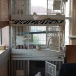 "Rescued pigeons and a dove each on their cage ""porch"""