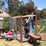 MickaCoo volunteers building an aviary for rescued pigeons