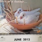 MickaCoo rescued pigeons featured in Mickaboo calendar