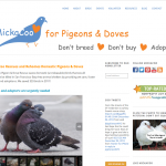 We launched our own website: PigeonRescue.org