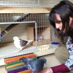 Blind pigeon Lucky & mate Biscuit were adopted by Helen