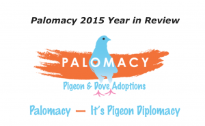 Palomacy 2015 Year in Review Thumbnail