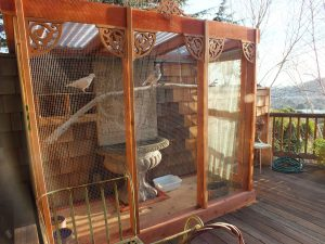 A lost racing pigeon inspired this lovely aviary (big enough for 4 birds)