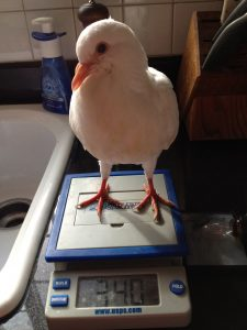 Know the healthy weight of each of your birds