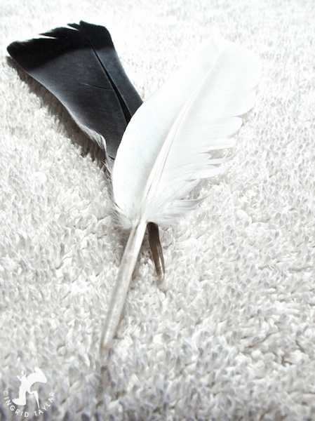 Blue White Feathers