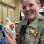 SFACC Animal Care Officer Ellie has rescued many pigeons!