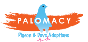 Palomacy Pigeon & Dove Adoptions