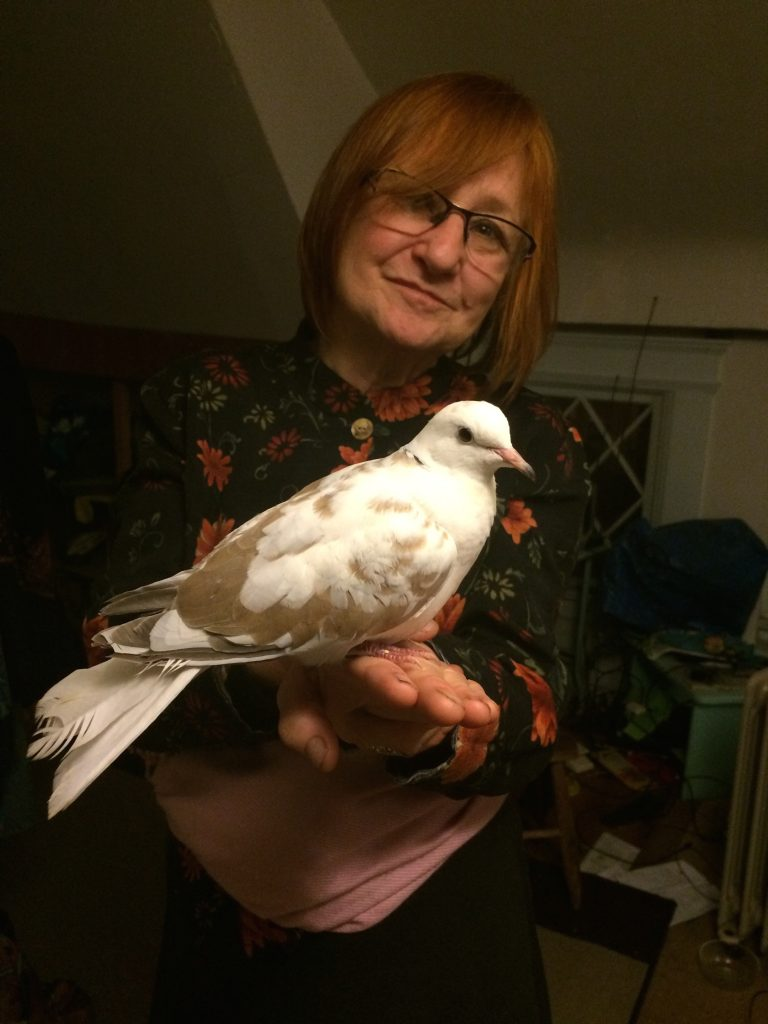 Reed the dove happily perched on Carole's hand