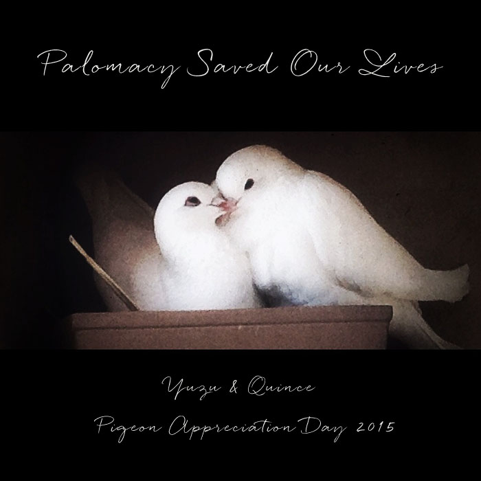 Yuzu and Quince Palomacy Pigeon Appreciation 2015 by Shae Irving