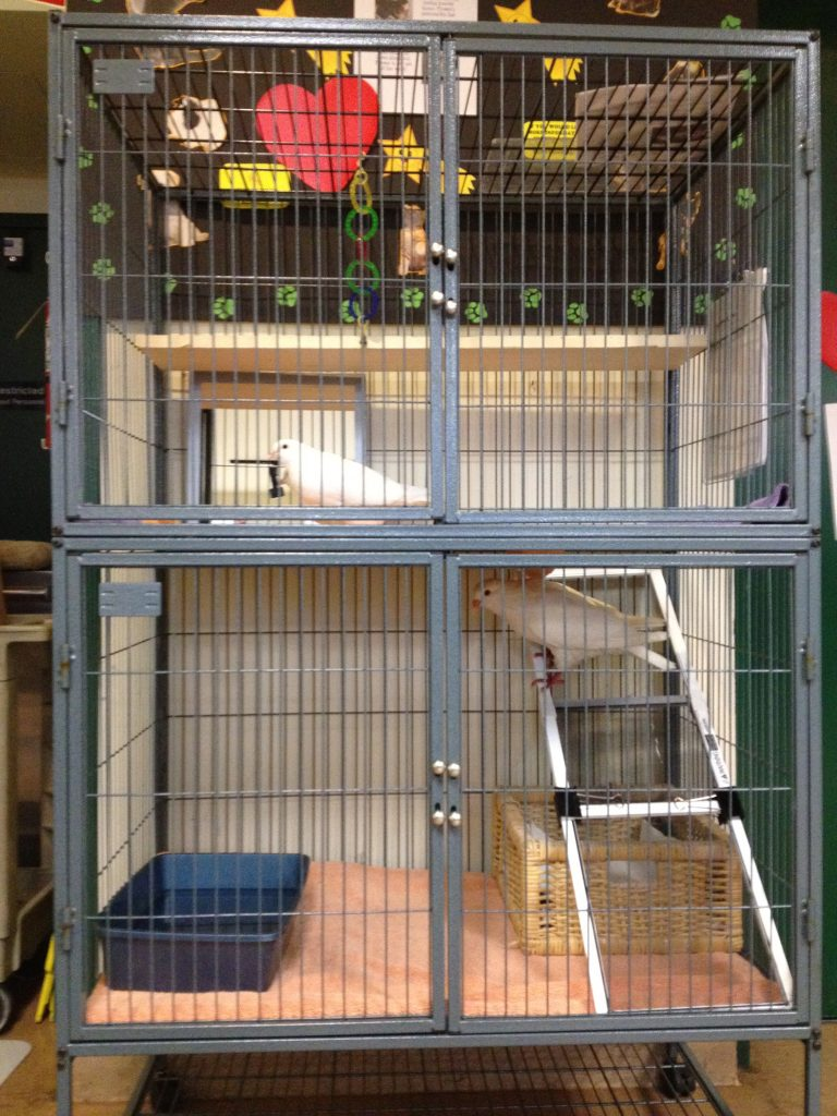 Large double-decker small animal cage can be a good indoor cage for 1-2 pigeons