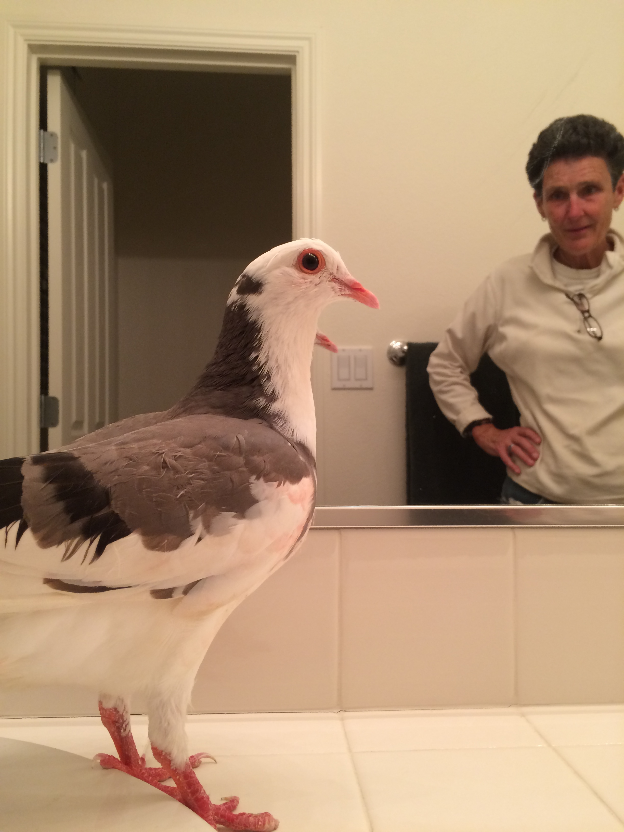 Rescued pigeon Ajax and her person Debbie