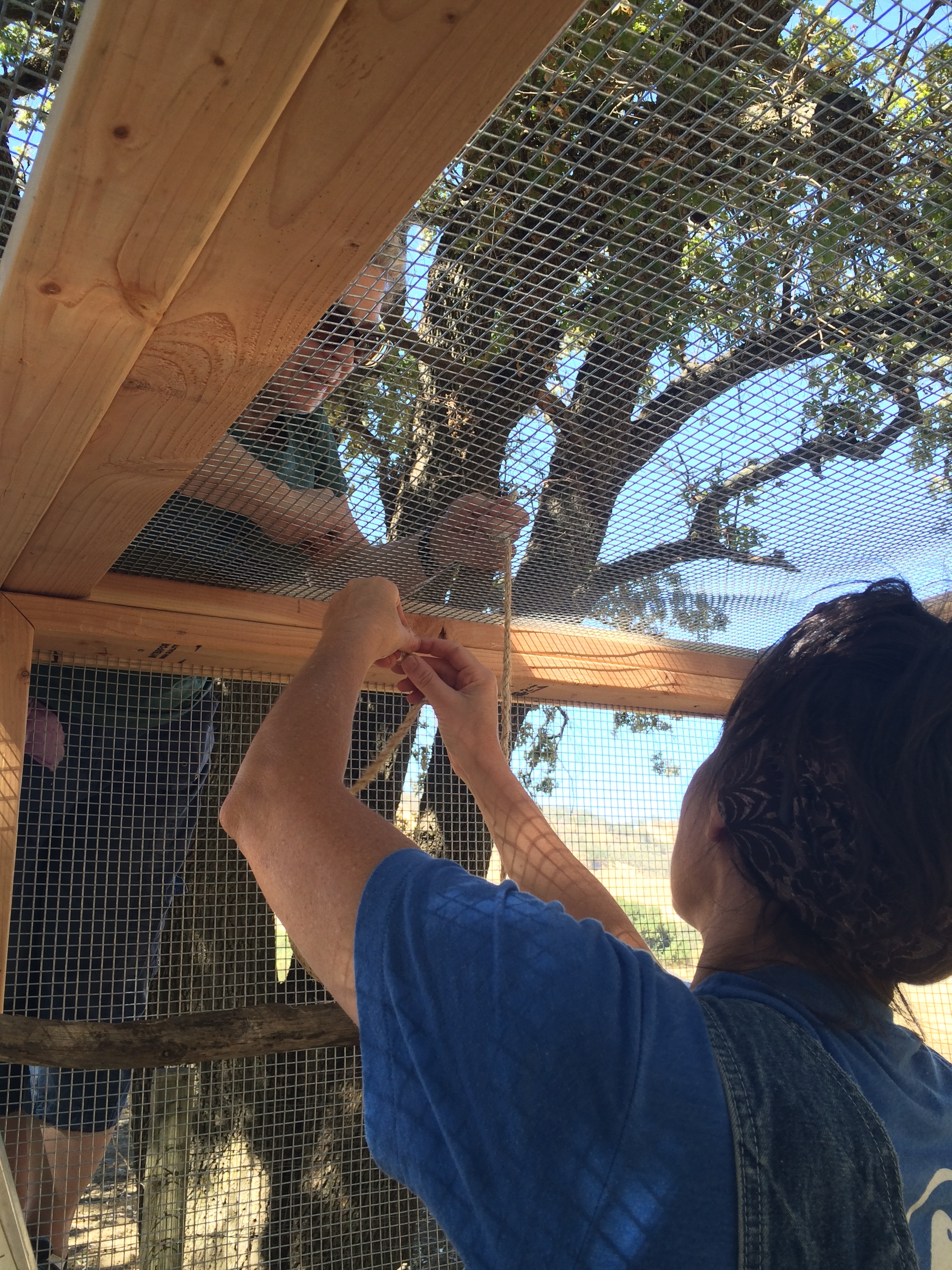 Ellie & Helen added two 'swing' style perches