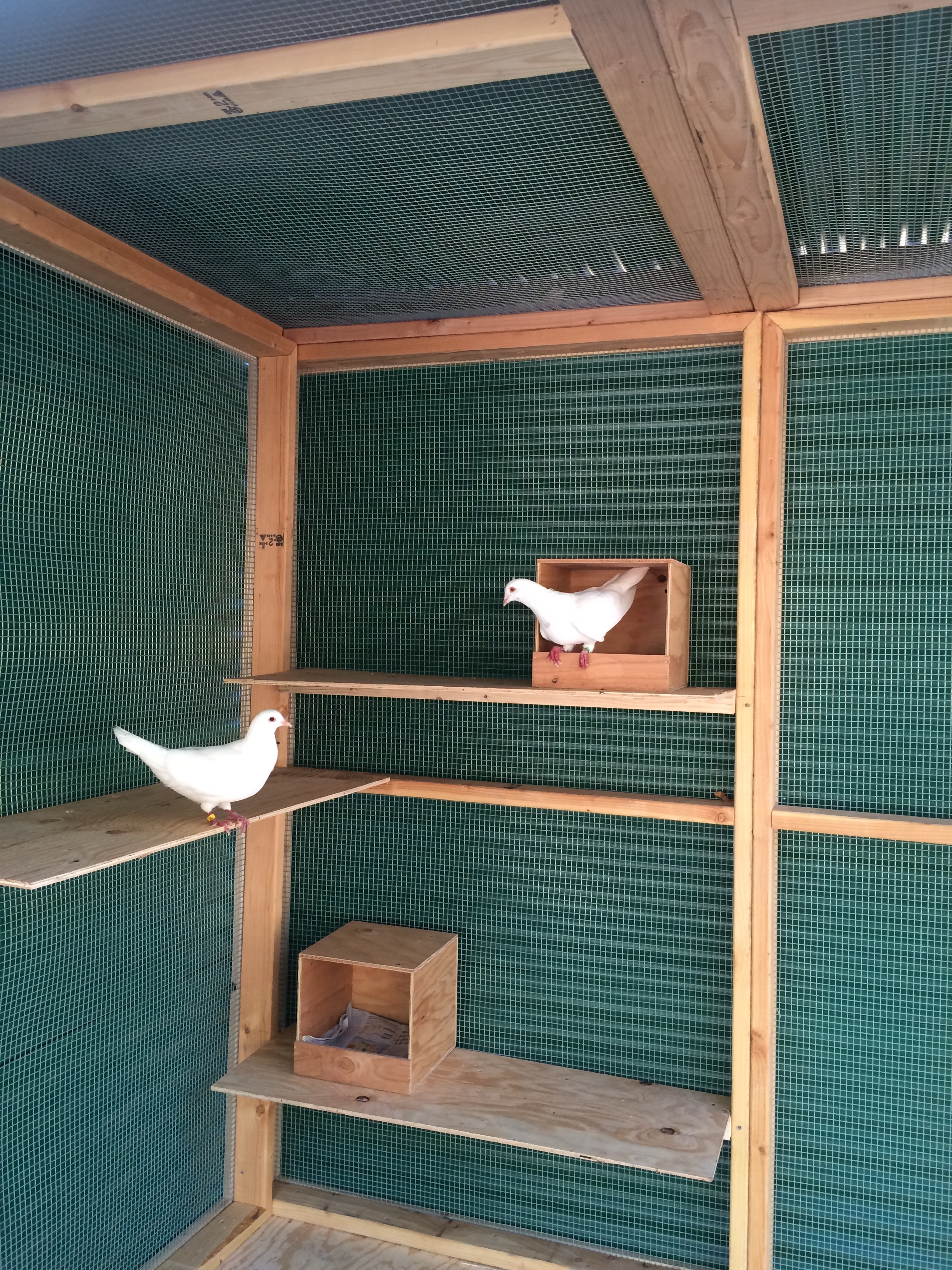 Maya & Boo checking out the nest box area (one pox per couple)