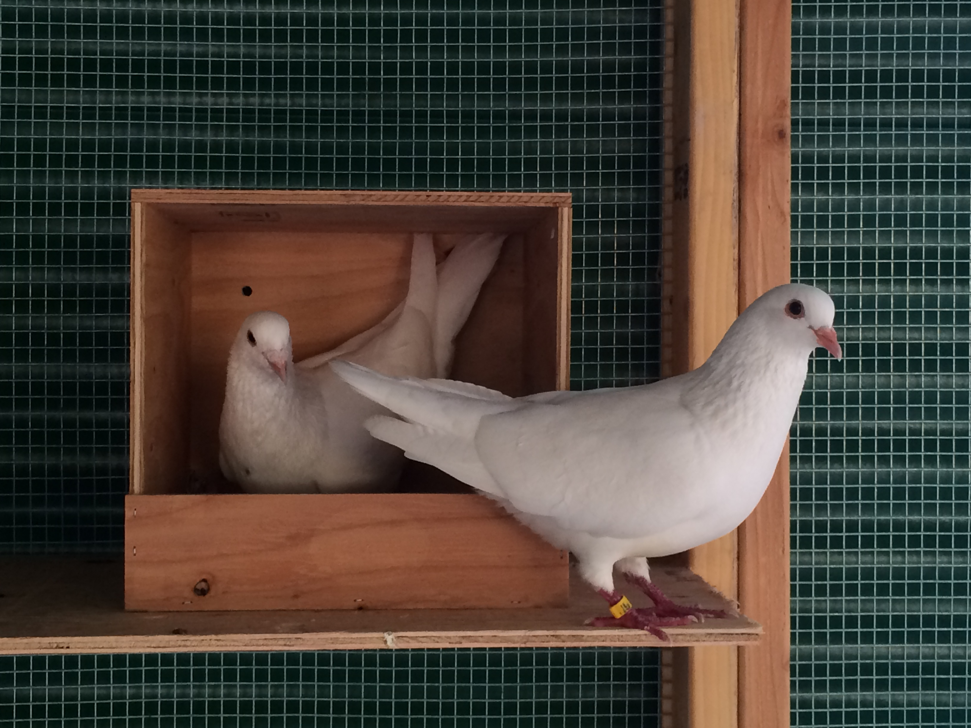 Boo & Maya trying out a nest box