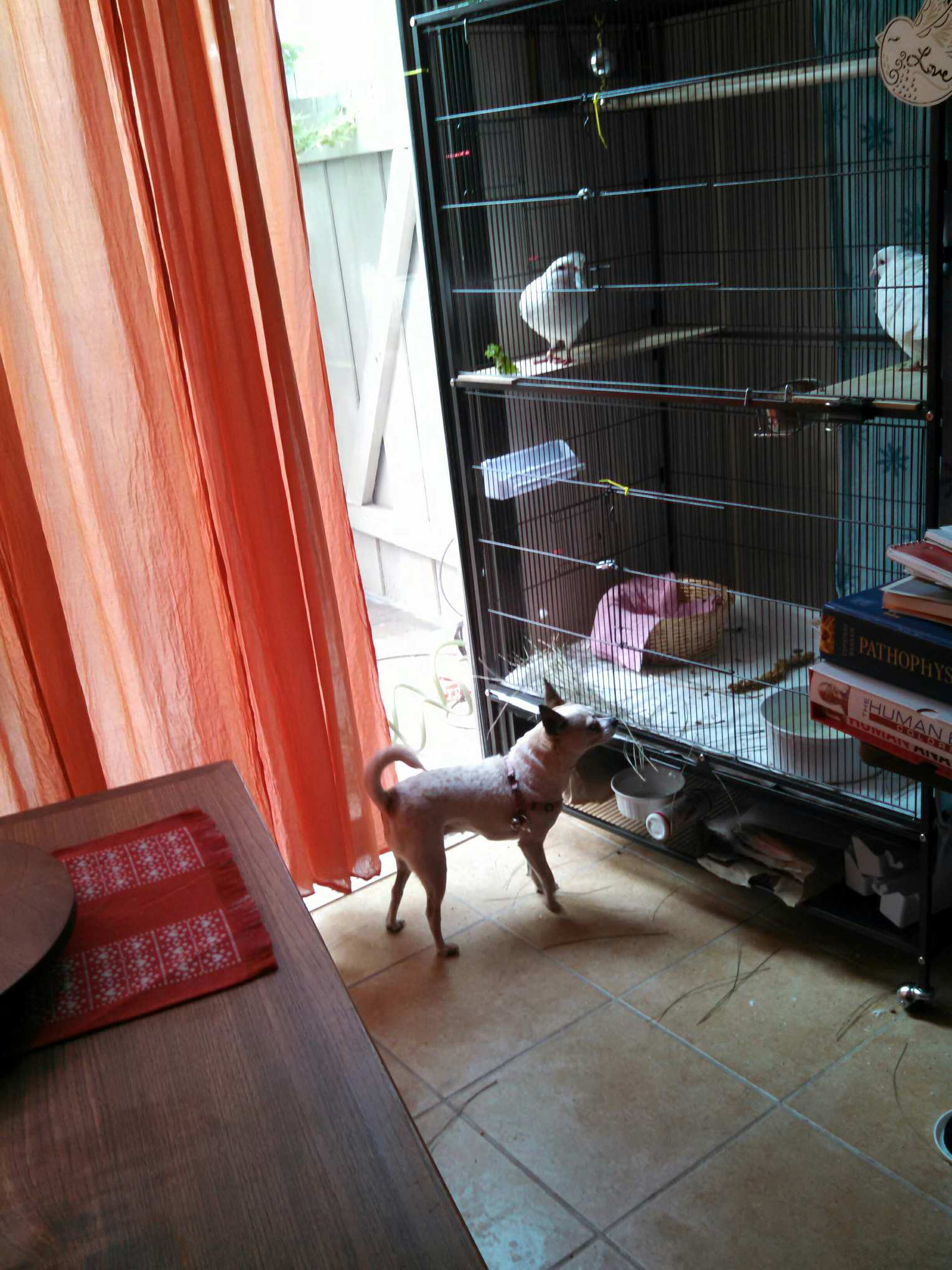 Aviary in the apartment for a dog with their own hands. Keeping dogs at home 59