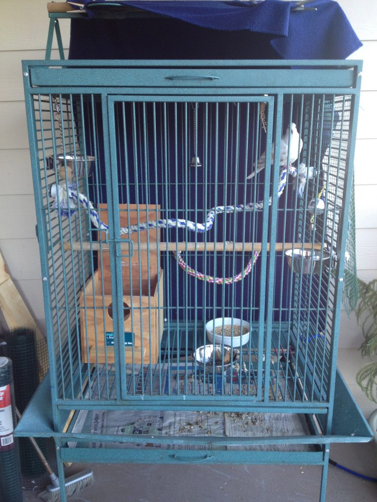 A parrot cage can make a nice home for 1-2 doves but this is NOT SAFE OUTSIDE