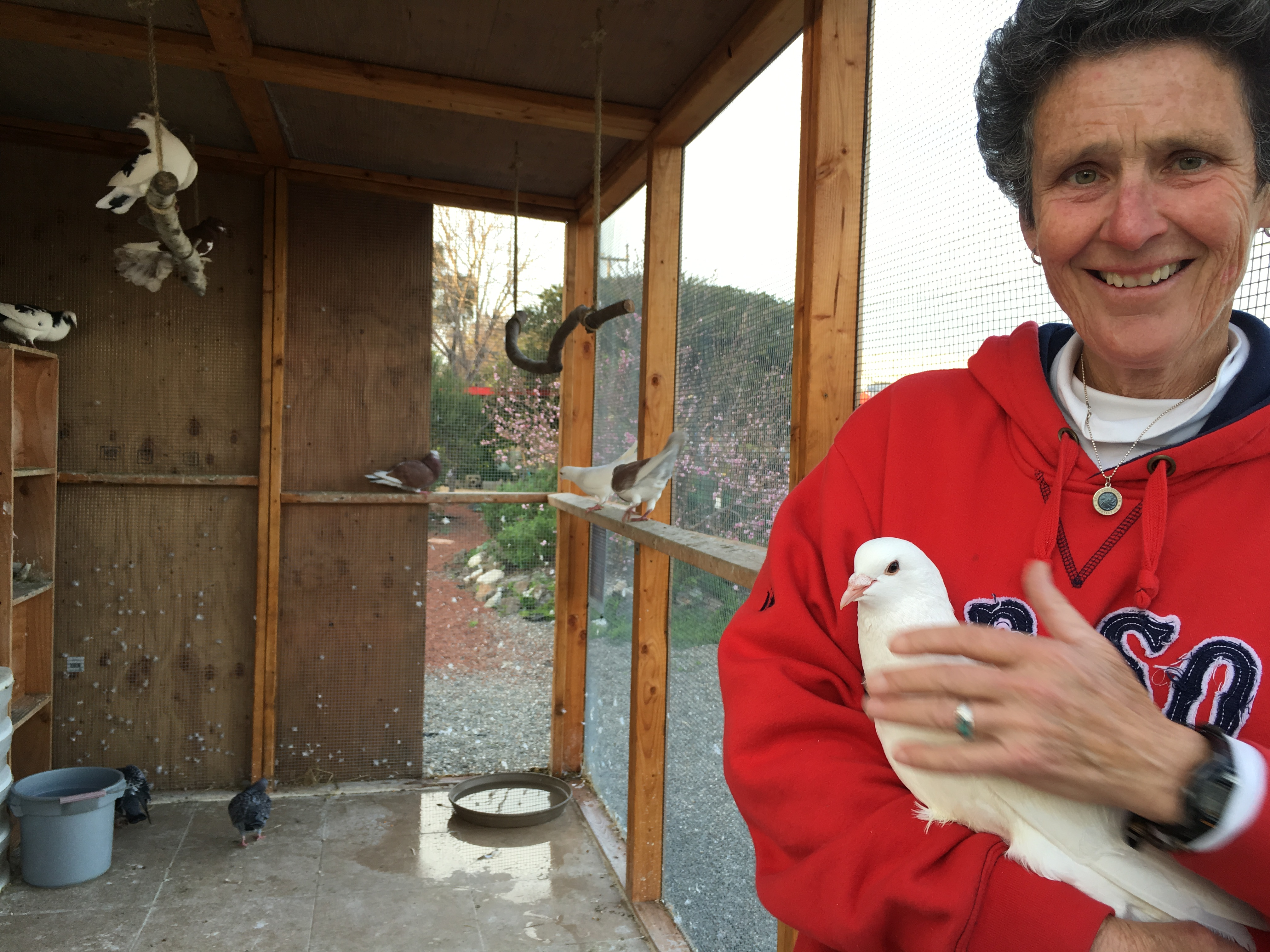 Noodles warmly welcomed to Ploughshares aviary by volunteer Debbie