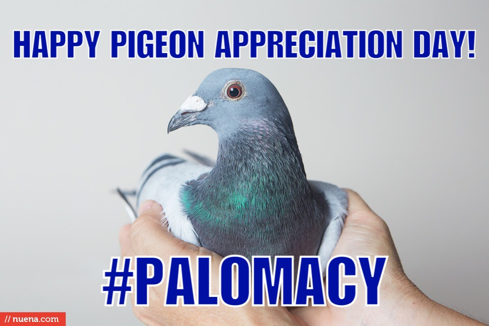 Indy Says Happy Pigeon Appreciation Day (Photo by Kira Stackhouse)