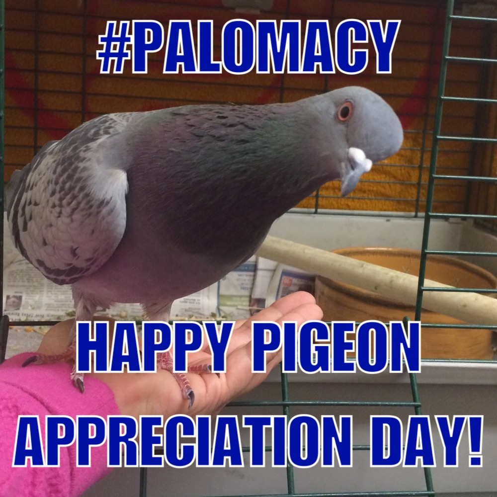 Daisy Says Happy Pigeon Appreciation Day