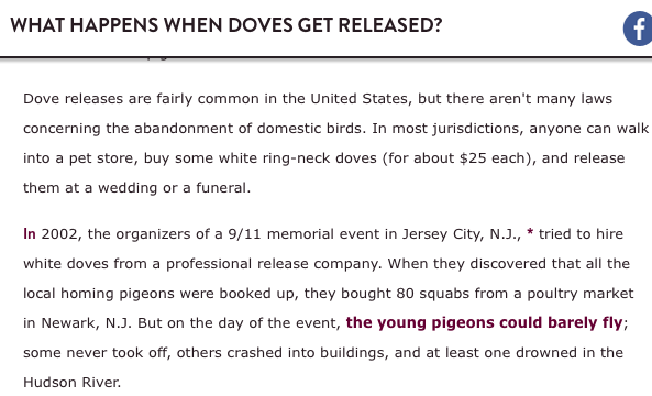 What Happens When Doves Get Released