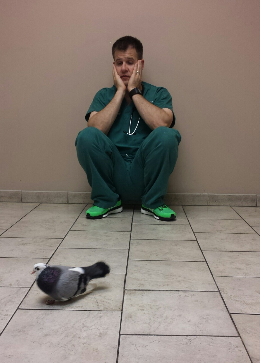 Avian vet sits on the exam room floor watching crippled pigeon walk