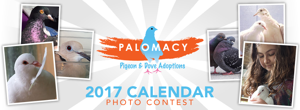 palomacy-2017-calendar-photo-contest-banner