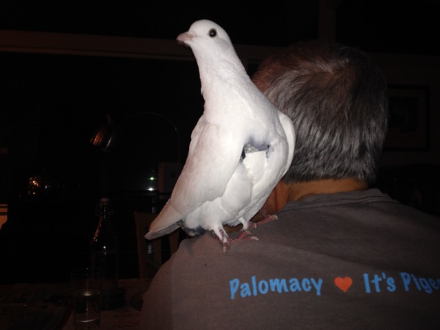 Pigeon on a man's shoulder