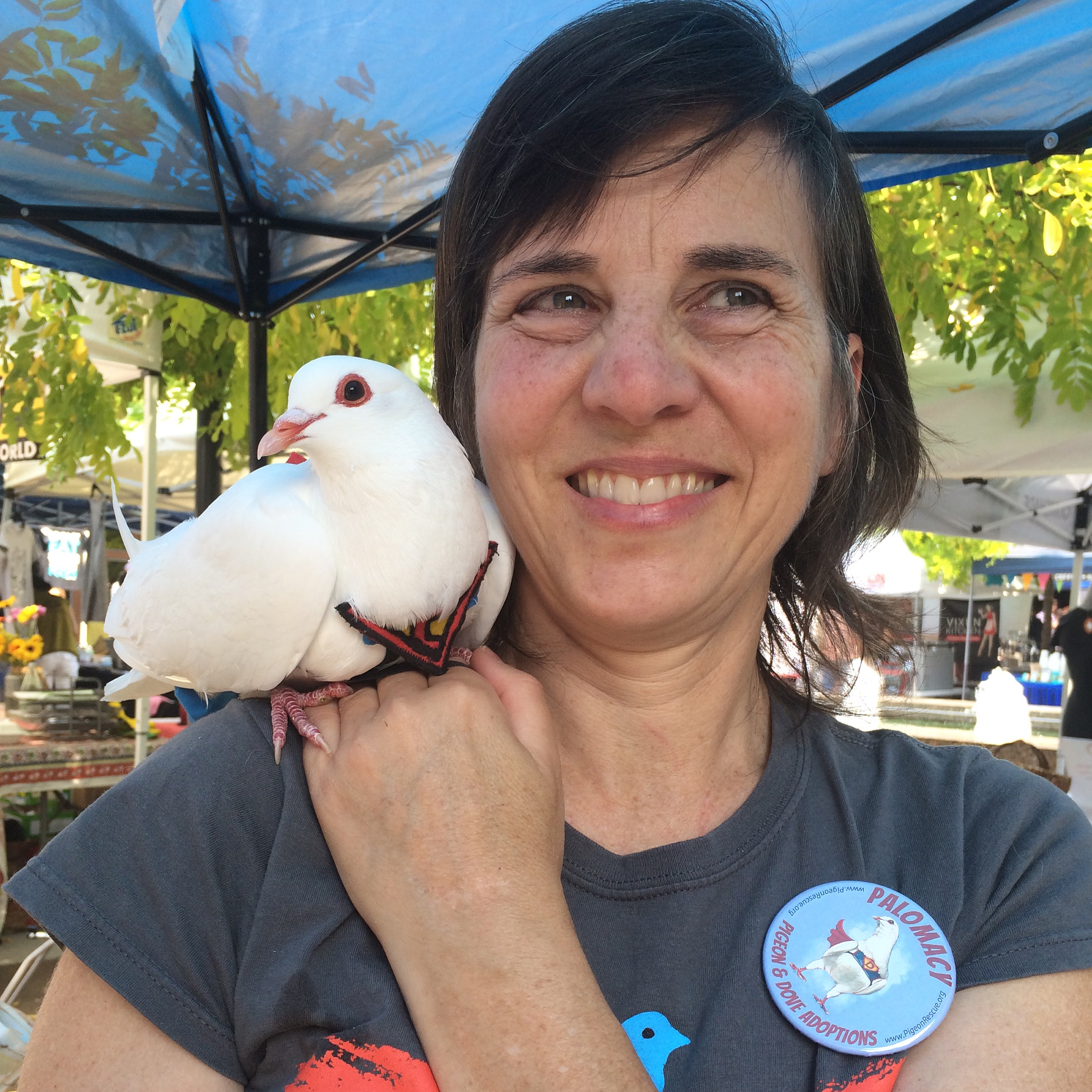 Reaching Out with Pigeon & Dove Diplomacy  