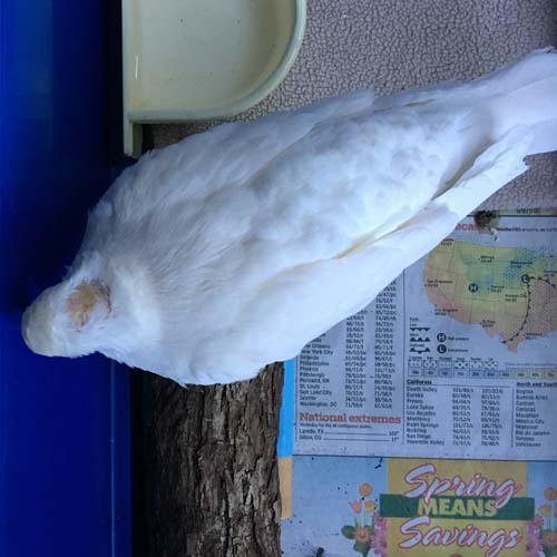 Three Days With Liberty | The Palomacy Blog