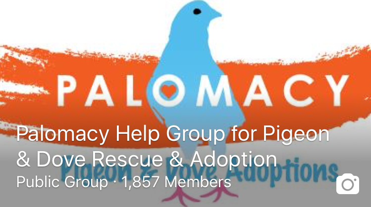 Join Palomacy Facebook Group